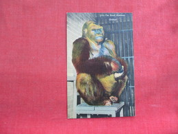 The Great Bushman  Largest Ape   Chicago  Ref 3291 - Animals