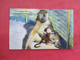 Mother & Baby Baboon Florida   Ref 3291 - Animals