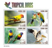 SIERRA LEONE 2019 - Tropical Birds, Pelican. Official Issue. - Pelikanen