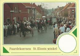 VN 91118 Sint Eloois Winkel  Paardekoersen Aan De Steenmolen - Ledegem