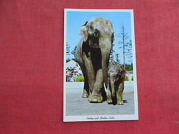 Elephants Packy & Mother Belle Oregon     Ref 3292 - Elephants