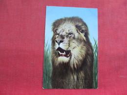 Tiger    Ref 3292 - Lions