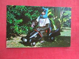 Monkey In Bat Man Car Miami Fl    Ref 3292 - Monkeys