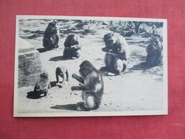 Blida Goorges De La Chiffa     Ref 3292 - Animals
