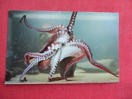 Pacific Octopus Vancouver Aquarium    Ref 3292 - Fish & Shellfish