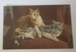 """""""Katzen, Sofa""""  1910 ♥  - Chats"""