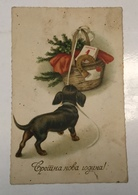 AK  DOG  DOGS  HUNDE   HUND  DACKEL   DACHSHUND - Hunde