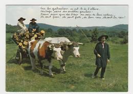 Morvan Folklorique Groupe Les Galvachers Du Morvan Postée De Chatillon En Bazois En 1979 Bel Attelage De Boeufs - Teams