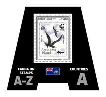 SIERRA LEONE 2019 - Fauna, Ascension Is.: Frigate-bird. Official Issue. - Albatros & Stormvogels