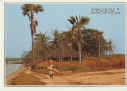 C.P. - PHOTO - SÉNÉGAL - PAYSAGE SÉNÉGALAIS - AFRICA - Sénégal