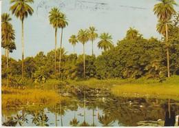 C.P. - PHOTO - IMAGES DU SÉNÉGAL - BAMBO POOL A ABUKA - GAMBIA - PC 90 - E. F. BREWER - - Sénégal