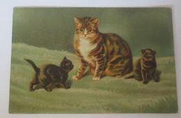 """""""Katzen, Babykatzen""""  Ca. 1910 ♥ (27035) - Chats"""