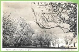 Faro - Amendoeiras Em Flor - Algarve (Fotográfico) (postal Danificado) - Faro