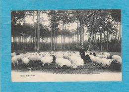 Au Pays Landais. - Un Troupeau De Moutons, Un Berger. - France