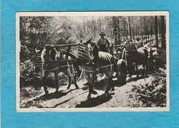 Carte Photo : Au Pays Landais, 1947. - Attelage De Mules En Été. - France