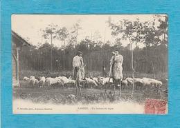 Landes. - Un Instant De Repos. - Les Bergers, Les Moutons. - France