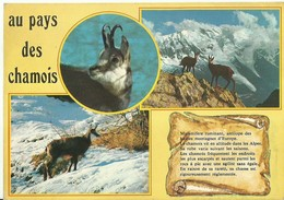 """3357  """"AU PAYS DES CHAMOIS"""" CART. POST.OR. NON SPED. - Animali"""