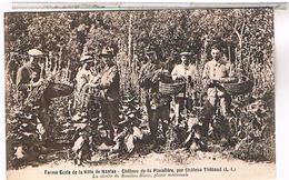 44.. Ferme Ecole Ville De Nantes Chateau Placeliere Par Chateau Thebaud Recolte Du Bouillon Blanc    1928 La160 - Nantes