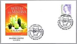 MOSTRA DELLA MINERVA - Suculentas - Cactus. Salerno 2014 - Cactus