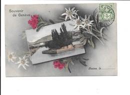 Souvenir De GENÈVE. (fleur Edelweiss) - GE Genève