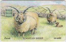 #08 - ISLE OF MAN-29 - LOGHTAN SHEEP - Man (Eiland)
