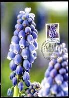 97882) BRD - MK 02/2019 = Mi 3447 - 80939 MÜNCHEN Vom 01.03.2019 - Aufl:2.500 - 120C   Blumen Traubenhyazinthe - Maximum Cards
