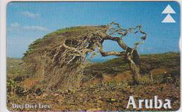 #08 - ARUBA-04 - DIVI DIVI TREE - Aruba