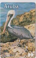 #08 - ARUBA-05 - PELICAN - Aruba