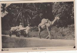 UGANDA - Camel Transport - Uganda