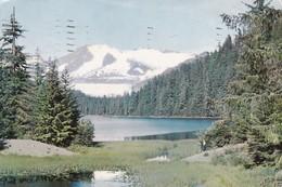CLOSE TO JUNEA, CAPITAL CITY OF ALASKA.AUKE LAKE. PLASTICHROME. ADVERTISING PENTHATOL-CIRCULEE 1959 BUENOS AIRES - BLEUP - Juneau