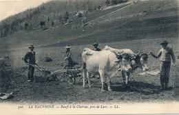 I107 - 38 - LANS - Isère - Boeufs à La Charrue - Autres Communes