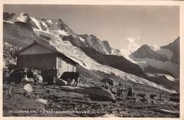"""0404 """"COGNE (AO) - NUOVO RIFUGIO AL MONEY"""" ANIMATA, MANDRIA. CART. ORIG. SPED. 1935 - Italie"""