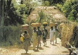 Afrique - Sénégal - Retour Des Rizières - Cpm - écrite - - Sénégal