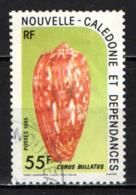 NUOVA CALEDONIA - 1985 - Conus Bullatus - USATO - Nuova Caledonia
