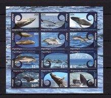 Aitutaki, 2012. [n0004] Marine Fauna (s\s) - Baleines