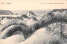 OSTENDE - Un Coin Pittoresque Dans Les Dunes - Oostende