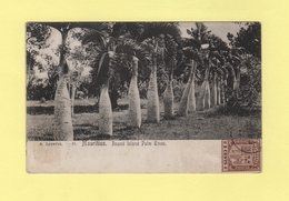 Maurice - Round Island Palm Trees - Maurice