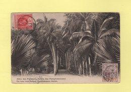 Maurice - Allee Des Palmiers - Jardin Des Pamplemousses - Maurice