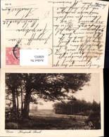 608955,Doorn Kaapsche Bosch Netherlands - Ansichtskarten