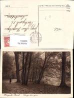 608953,Den Haag Haagsche Bosch Langs Den Vijver Baum Park Netherlands - Ansichtskarten