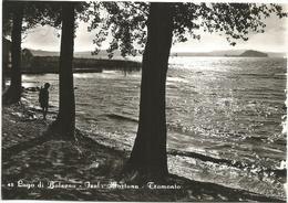 W2599 Bolsena (Viterbo) - Il Lago - Isola Martana - Tramonto Sunset Coucher / Non Viaggiata - Altre Città