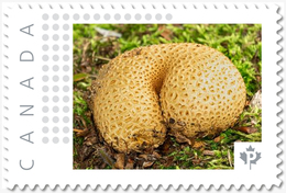 Curved MUSHROOMS = Picture Postage MNH-VF+ Canada 2019 [p19-04s08] - Paddestoelen