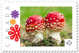 TWIN FLY AGARIC MUSHROOMS = Picture Postage MNH-VF+ Canada 2019 [p19-04s09] - Paddestoelen