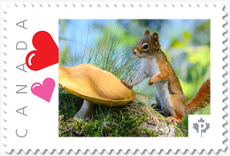 SQUIRREL And MUSHROOM = Picture Postage MNH-VF+ Canada 2019 [p19-04s10] - Paddestoelen