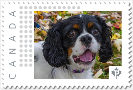SPANIEL = DOG = Picture Postage Canada 2019 [p19-04s15] MNH-VF+ - Honden