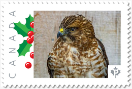 FALCON = BIRD OF PREY = Picture Postage Canada 2019 [p19-04s19] MNH-VF+ - Arends & Roofvogels
