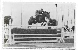 Pinerolo (Torino). Cavallo - Capitano Baldo Bacca - Scuola Di Cavalleria. - Cavalli