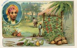 LES COMORES(CHROMO) - Comores