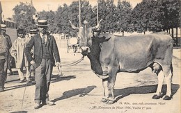 79-NIORT- CONCOURS DE NIORT 1906, VACHE 1er PRIX - Niort