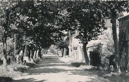 CPSM - France - (32) Gers - Ligardes - Avenue De Nerac - France